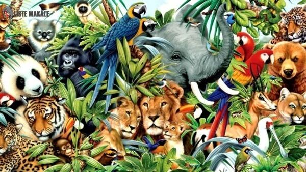 En Uzun Yaşayan Hayvanlar