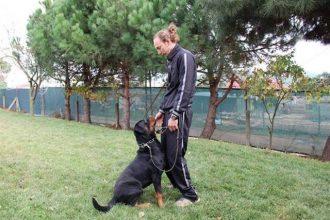 İleri İtaat Köpek Eğitiminde Uzman Seçmenin Önemi