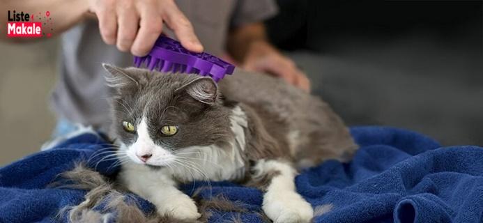 Kedi Sağlığı Nasıl Korunur?