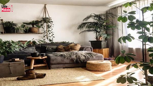 Ev Dekorasyonunda Kullanılan Bitkiler