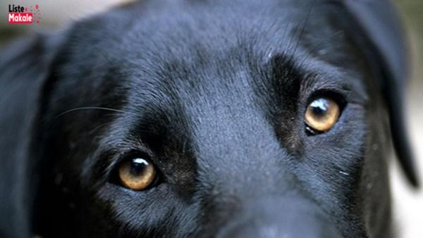 Rüyada Köpek Görmek Nedir?