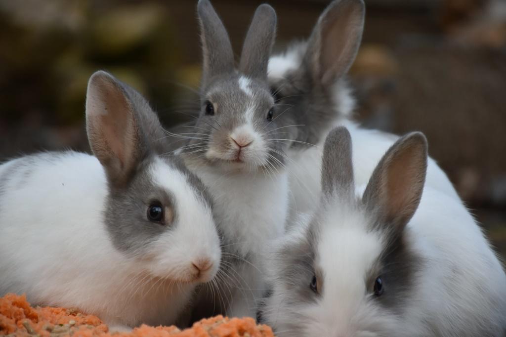 Erkek ve Dişi Tavşan İsimleri