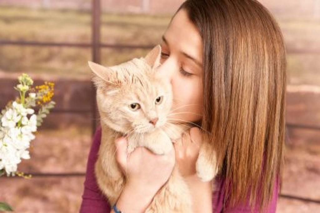 Kediler Öpüldüğünü Anlar mı?