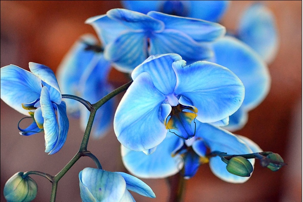 Orkide Bakımı Nasıl Yapılıyor?